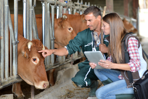 ganadero y veterinaria